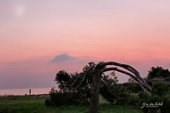 Sunset Istria (TashTashMe) Tags: sunset coast istria winter tree dog people person silhouette silhouete croatia sea beach sun clouds moon nature pinetree pine broken pink purple green blue