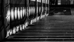 Licht und Schatten / Light and shadow (ludwigrudolf232) Tags: treppen brcke licht schatten rialto