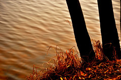 .... down to the lake (eggii) Tags: tree golden hour orange day water