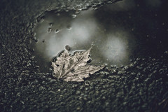 Defeated (Tammy Schild) Tags: leaf puddle rocks rain gravel helios