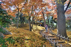 Kenroku-en: Fall Colors (jpellgen) Tags: japan japanese nihon nippon  ishikawa kanazawa kenrokuen garden zen     asia nikon 2016 fall autumn sigma 1770mm d7000 leaves leaf momiji koyo maple november travel honshu park nature scenery