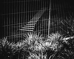 (Nico_1962) Tags: nacht night nederland stad urban leica summitar 50mm m8 rangefinder zwartwit bw blackandwhite leicam manualfocus thenetherlands primelens vintagelens ltm meetzoeker m39 hek fence ladder