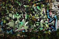 DSC_0770 (Di's Free Range Fotos) Tags: colour spraypaint art brambles tangle grownover graffiti