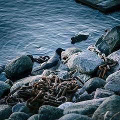 december nature (miemo) Tags: animal bird chains crow em5mkii europe finland helsinki nature olympus olympus60mmf28 omd rocks sea shore tervasaari water winter