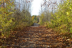 Wye Marsh Trail (D & E Grey Wolf Photography) Tags: trail path fall wyemarsh outdoors