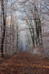 Oh boy, it's cold ! (FocusPocus Photography) Tags: wald forest weg path winter frost bltter leaves kalt cold hochdorfenz