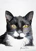 bender 17x25 watercolor (anna lobello) Tags: animals cat cats felini gatti black white pets paw animal portrait watercolor acquerello