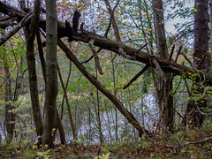 11102016-DSCF5830-HDR-2 (I Ring) Tags: oktober 2015 sweden nature tree autumn fujifilm fuji xt1