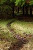 a small trail into the woods (malp007) Tags: wald forest tree træ trail weg waldweg outdoor pfad nature stig skov