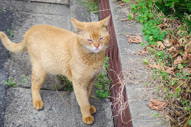 Today's Cat@2014-05-01
