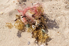 Nylon fishing line and seaweed (Lord Cogsby) Tags: seaweed fishing line nylon