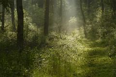 Speak To Me - Judges Choice (Rupert Grey): Landscape Photographer Of The Year 2014, Classic View (Russ Barnes Photography) Tags: wood trees summer mist forest sunrise woodland landscape dawn nikon cotswolds russbarnes nikkor70200mmvrii d800e