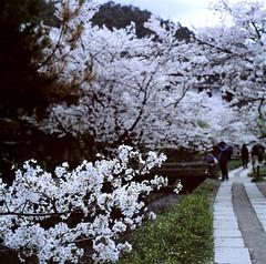 94730004 (Darjeeling_Days) Tags: hasselblad 京都 中判 プロビア