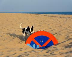 Perro y señal (cives-expat) Tags: españa trafalgar playa cádiz curso experimentos conildelafrontera