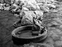 Marmade / Sirena (Luis Lpez l F O T O G R A F I A) Tags: sea mar escultura sirena oceano bronce marmade