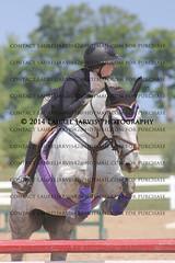 (262) IMG_7620 (laureljarvis) Tags: show park horse jumping collingwood run pony cedar jumper hunter equine thornbury
