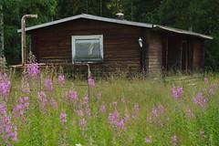 Saunaghost (Simon Isac) Tags: ghost sauna kummitus ruotanen