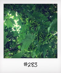 "#DailyPolaroid of 8-7-14 #283 • <a style=""font-size:0.8em;"" href=""http://www.flickr.com/photos/47939785@N05/14743823603/"" target=""_blank"">View on Flickr</a>"