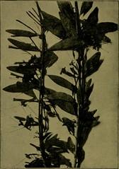 Anglų lietuvių žodynas. Žodis pollen-chamber reiškia žiedadulkių kamera lietuviškai.