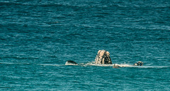 Breaching (Tbone Photography) Tags: whale peninsula eyre sleaford