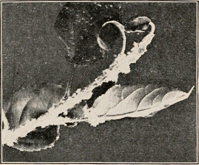 Image from page 33 of Introduction to zoology; a guide to the study of animals, for the use of secondary schools; (1900)
