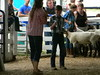 """Sheep 2014 • <a style=""""font-size:0.8em;"""" href=""""http://www.flickr.com/photos/78989085@N02/14878976412/"""" target=""""_blank"""">View on Flickr</a>"""