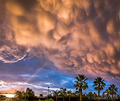 Mammatus at Sunset (DonMiller_ToGo) Tags: sunset summer sky panorama weather clouds landscape landscapes sunsets stormy panoramic g5 palmtrees blueskies skyscapes storms flares goldenhour sunflare mammatus lightflare skycandy millerville skypainter cloudsstormssunsetssunrises sunsetmadness sunsetsniper panoimages5