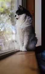 Vanity (Casey Christi) Tags: wood pet reflection cute window animal composition cat 35mm fur wooden nice nikon feline bokeh awesome kitty fluffy aww windowsill kittycat d7000 nikond7000