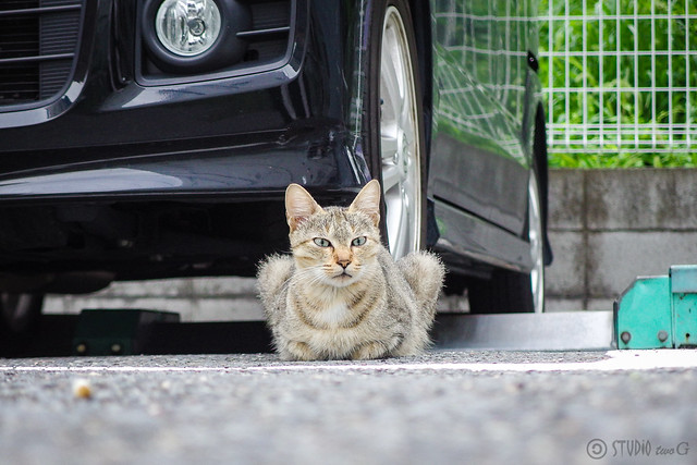 Today's Cat@2014-08-31