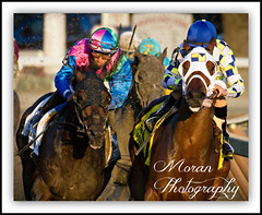 2014 Woodward (EASY GOER) Tags: summer horses horse ny sports racetrack race canon track saratoga competition racing 7d athletes races sporting spa 56 thoroughbred equine thoroughbreds 400mm sportofkings