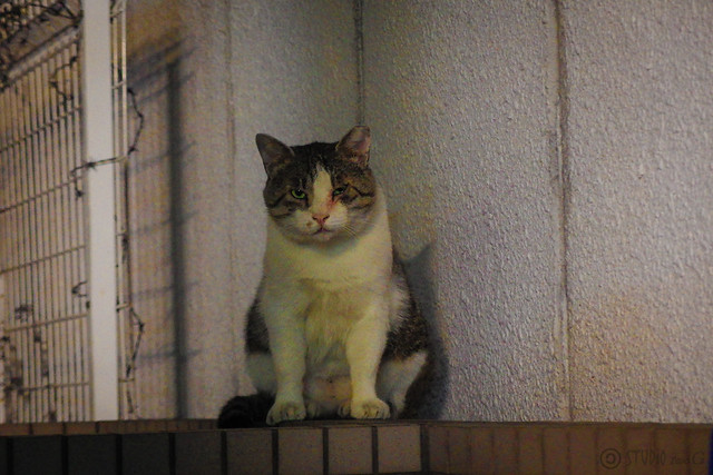Today's Cat@2014-09-19