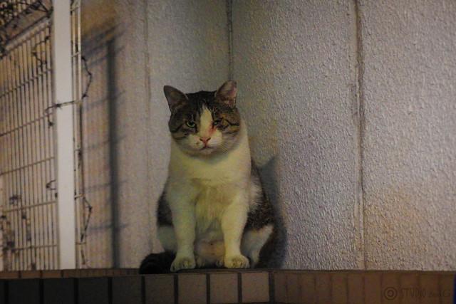 Today's Cat@2014-09-19