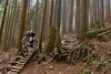 Trees and trails (fbcanada33) Tags: mountain bike vancouver bc mtb fromme