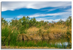 crick (das_gulde) Tags: park vegas blue trees sky nature water beautiful reeds nikon colorful slow desert lasvegas gorgeous nevada vivid wetlands pro blueskies preserve wetlandspark d5300