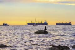 Lift-off (Erinn Shirley) Tags: ocean sunset bird nature landscape wildlife ships kitsilano cormorant erinnshirley erinncshirley