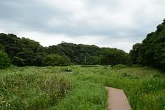 In Wood Of Koajiro (kzmiz) Tags: japan nd kanagawa density neutral miura misaki nd4 koajiro nikond800e