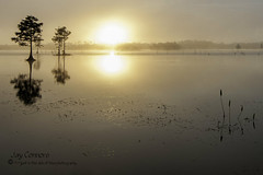 Foggy Glow (Weekend_Shooter) Tags: morning orange tree sunrise orlando glow florida swamp cypress wetland foogy owp
