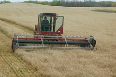 Teaming up to get'r done! (Jeannette Greaves) Tags: 2016 hugh jeannette wheat swather combine rlfarm