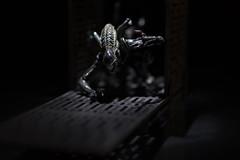 Alien Xenomorph (Jnipco) Tags: alien monday macro scfi xenomorph wideaperture