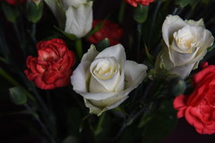 DSC_3217 (PeaTJay) Tags: nikond750 reading lowerearley berkshire macro micro closeups gardens indoors nature flora fauna plants flowers rose roses rosebuds carnations