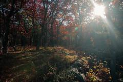7Q7A6185 (armincreates) Tags: nature fall colors trees lake mountains hike dog puppy beauty trail panorama sunset cows farm wisconsin illinois usa walk