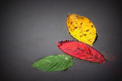 last trip #AutumnLeaves (jp Chambard) Tags: autumnleaves feuillesdautomne folhasdeoutono   herbstbltter hojasdeotoo flickrfriday flickr friday