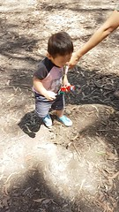 2016.10.10 -1 (amydon531) Tags:   gold coast australia trip travel vacation baby boys kids brothers justin jarvis family toddler cute paradise country kangaroos