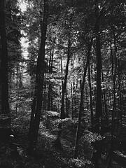 16 (Elenaire) Tags: mountains mountain iphone iphone7 iphonephotography landscape sun trip bergamo italy oltreilcolle oltre il colle