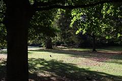 Afternoon shadows, St James's Park (NovemberAlex) Tags: colour light london urban trees stjamespark