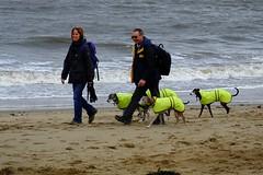 beach dog posse 02 (byronv2) Tags: edinburgh edimbourg portobello sea seaside shore beach scotland northsea coast coastal rnbforth firthofforth firth forth river riverforth street candid peoplewatching dog dogs greyhound