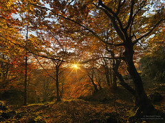 Sunset at Luginsland 2016-3 (Bernhard_Thum) Tags: bernhardthum thum nature franken hasselblad hcd4824 schwarzerbrand hirschbachtal autumn sunsetlight