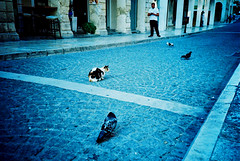 Surrounded (Stephen Dowling) Tags: 35mm film cosinacx2 agfact100precisa corfu greece travel summer lomography xpro crossprocessed