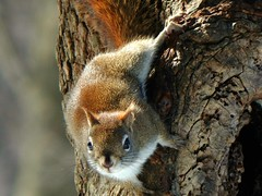 Hello There! (guarnc) Tags: squirrel massachusetts wildlife
