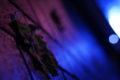 autum in neon_2 (MidWorldMo) Tags: autumn autumnal neon birmingham birminghamphotography birminghamphotographer symphonyhall centenarysquare night nighttime nightshot blue pink white black brick leaf leaves sonya6000 sonyalpha sony october